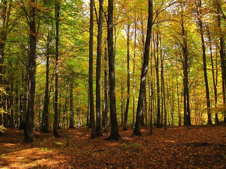 یادداشت خانم مهدیه جهانگیر در مورد ثبت جهانی جنگلهای هیرکانی