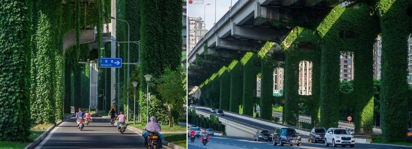 گیاهان راه نجات فضاهای گمشده شهری خواهند بود